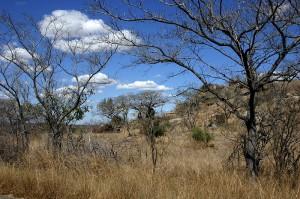 Krüger Nationalpark - Highlights einer Südafrika-Reise