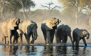 Simbabwe - Nachbarländer Südafrikas